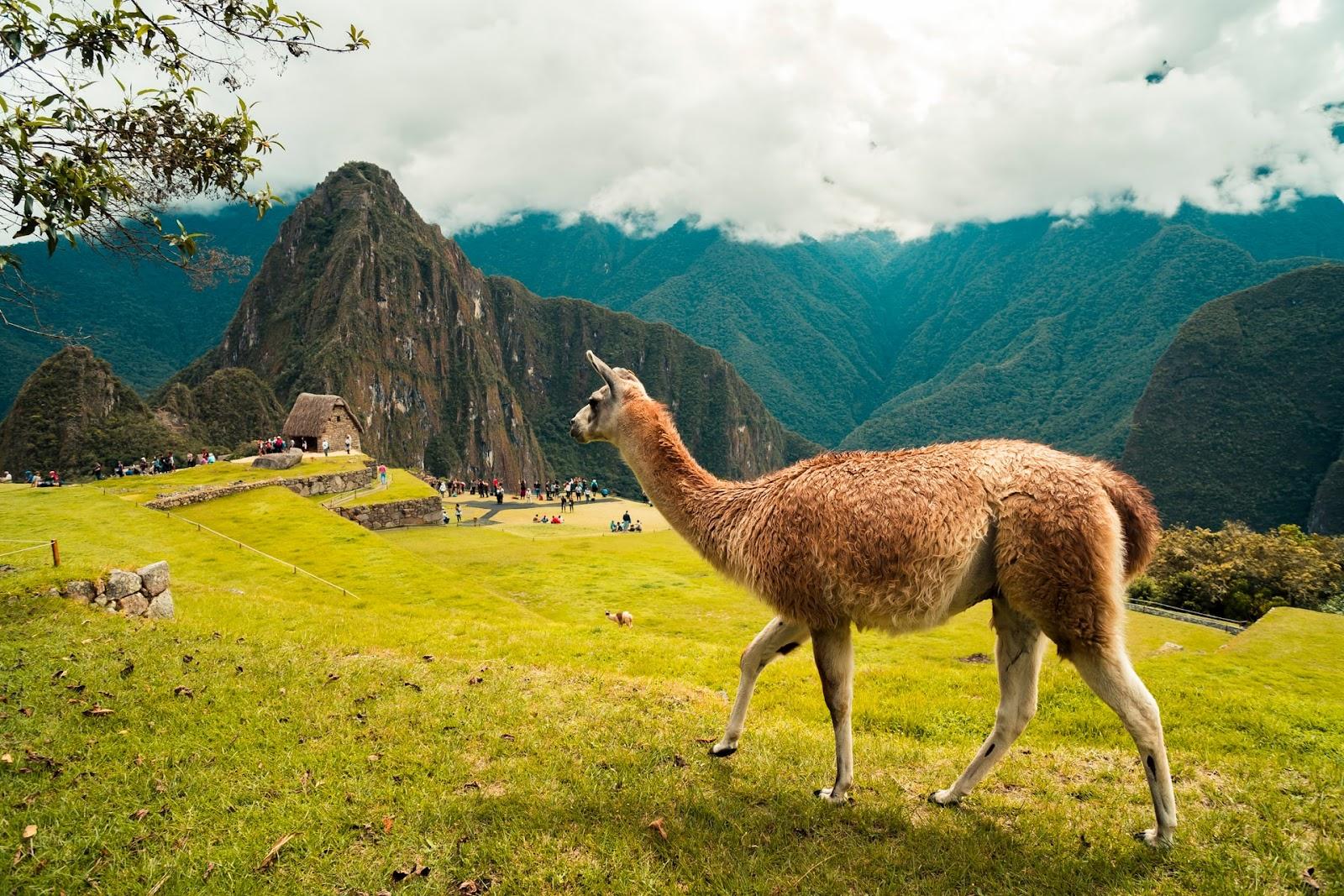 Tätigkeiten einer Tourismuskauffrau oder eines Tourismuskaufmanns