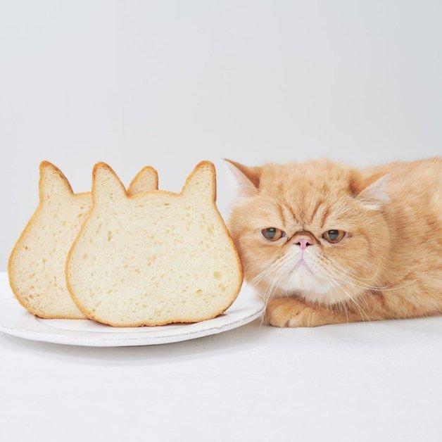 NEKO NEKO SHOKUPAN貓咪吐司專賣店 貓奴 快閃 日本 吐司