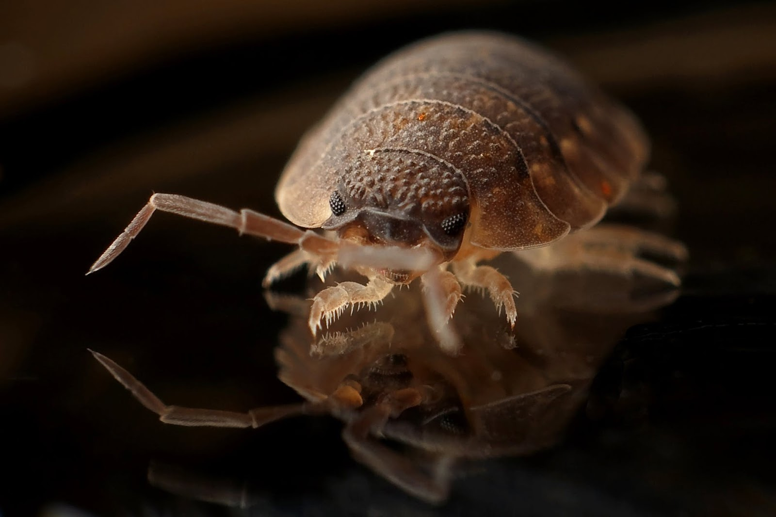 stop bed bugs in indianapolis indiana with heat treatment solutions