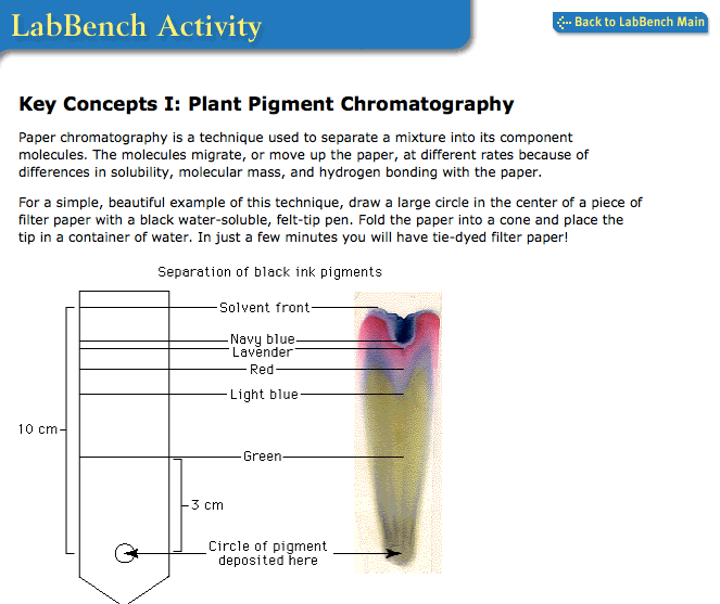 chromatography of pigments Chromatography was first employed in russia by the italian-born scientist mikhail tsvet in 1900 he continued to work with chromatography in the first decade of the 20th century, primarily for the separation of plant pigments.