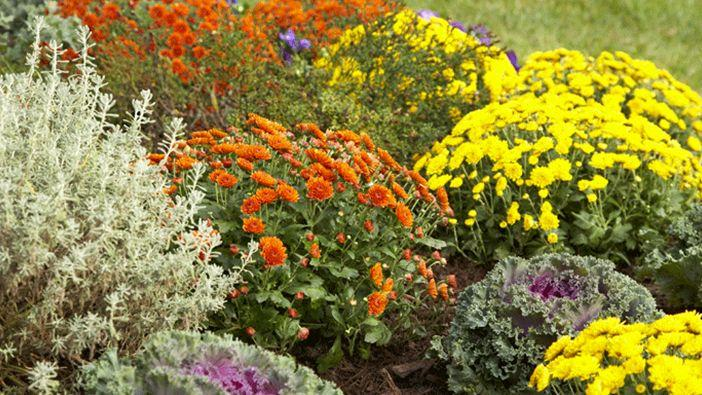 Best Fall-Blooming Annuals and Perennials