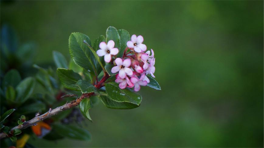 Flowering Stick.jpg