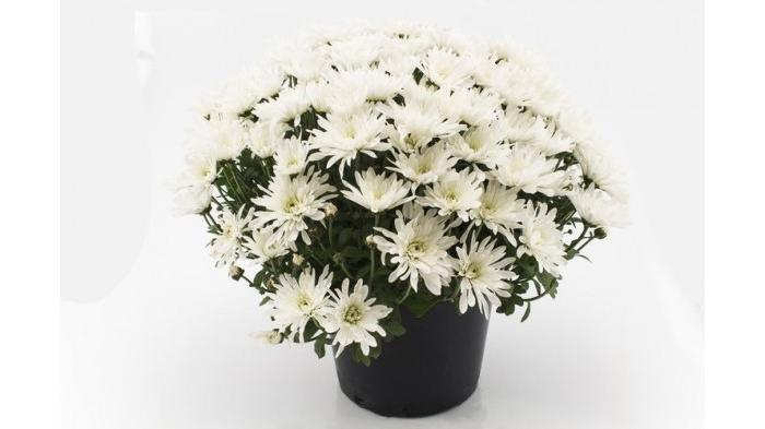 Manfaat Bunga untuk Kehidupan Manusia