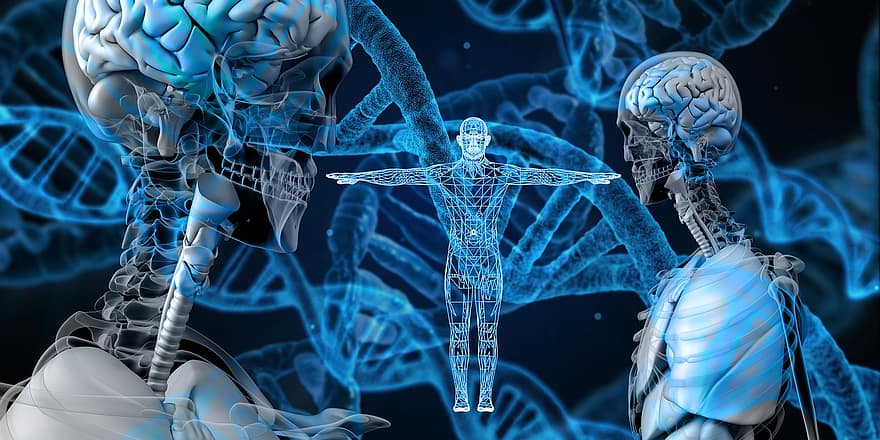 A series of DNA spirals in the background with a futuristic computer generated skeleton in the foreground.