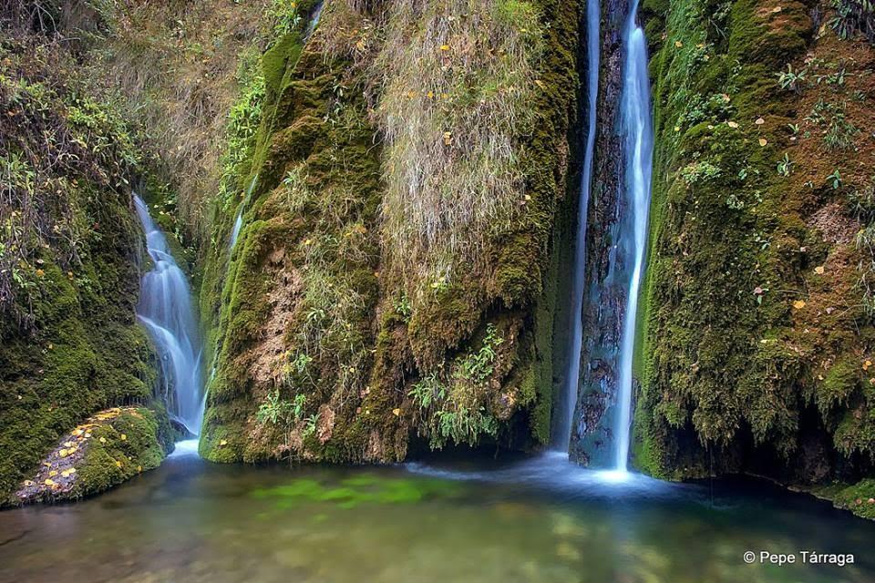 La imagen puede contener: árbol, exterior, naturaleza y agua