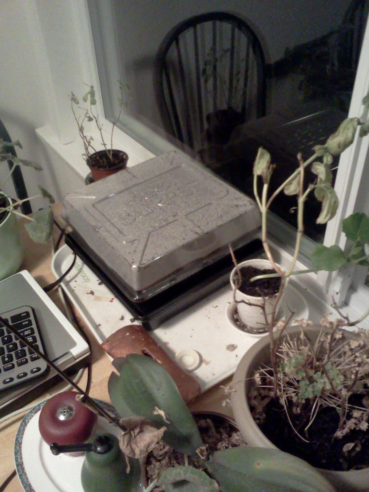 IMG1318 - seeds sown - burpee thing.jpg