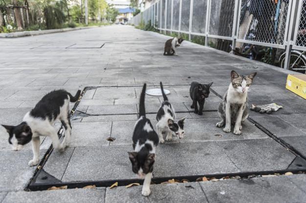 Gatos callejeros día del animal sin hogar