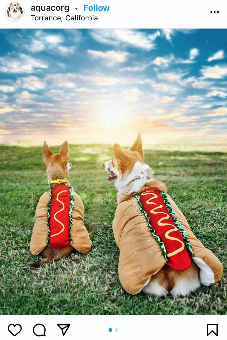 Halloween Costume Ideas For Dogs Hot Dogs