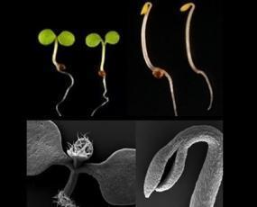 תוצאת תמונה עבור plant growth dark