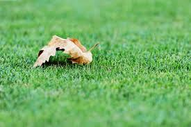 4 Tips to Keep Artificial Grass Looking Great | Purchase Green