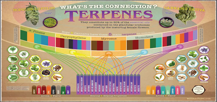 The Rainbow of Terpene Flavors