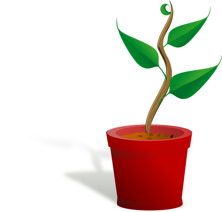 ... Growing, Leaf, Plant