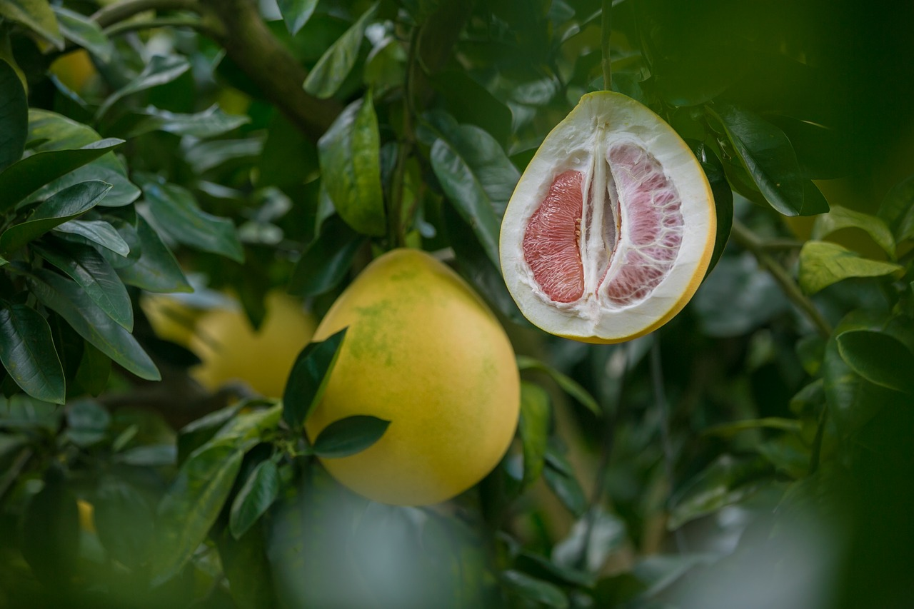 Grapefruit seed extract, often used as a potent herbal antibiotic, has been shown again and again to be a contaminated product spiked chemicals like benzethonium chloride and triclosan.