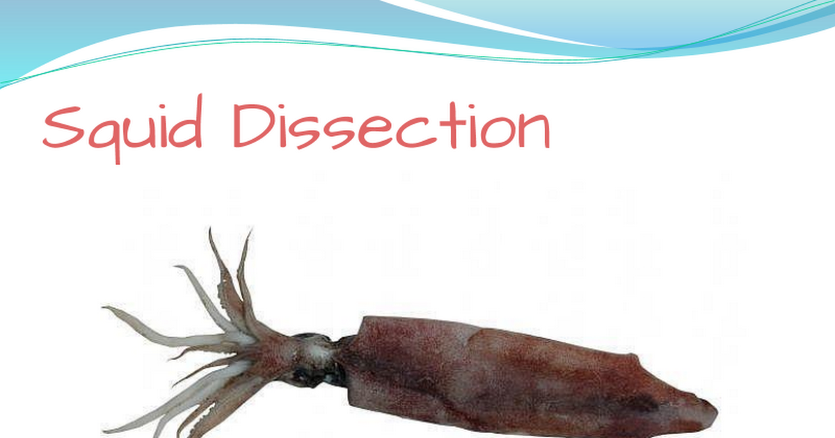 squiddissection.pptx - Google Slides