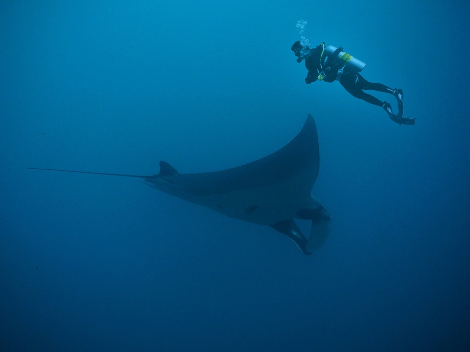 Swimming with the Manta Rays