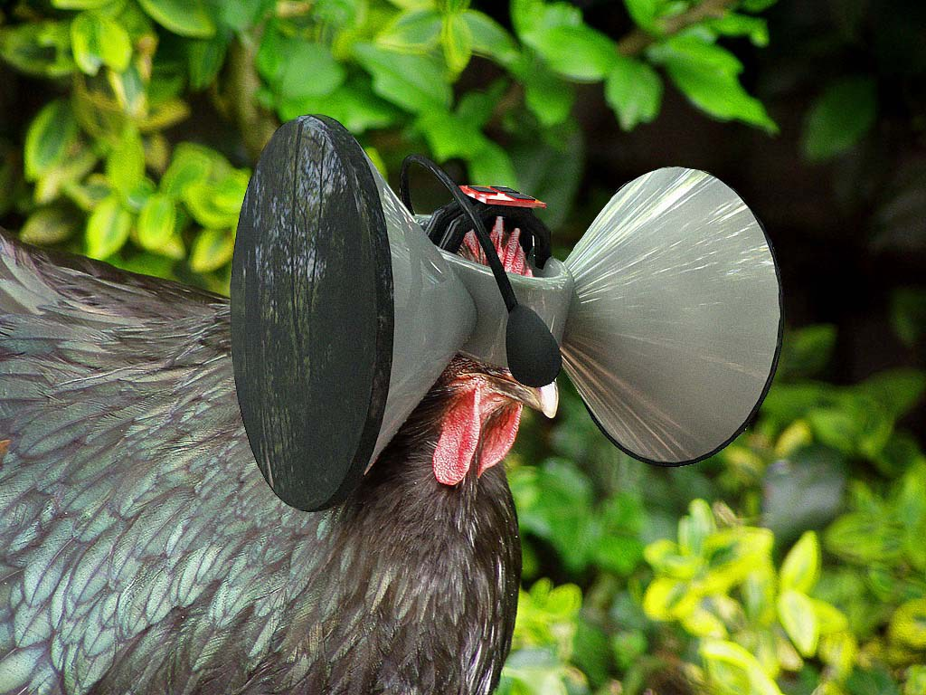 virtual reality chicken