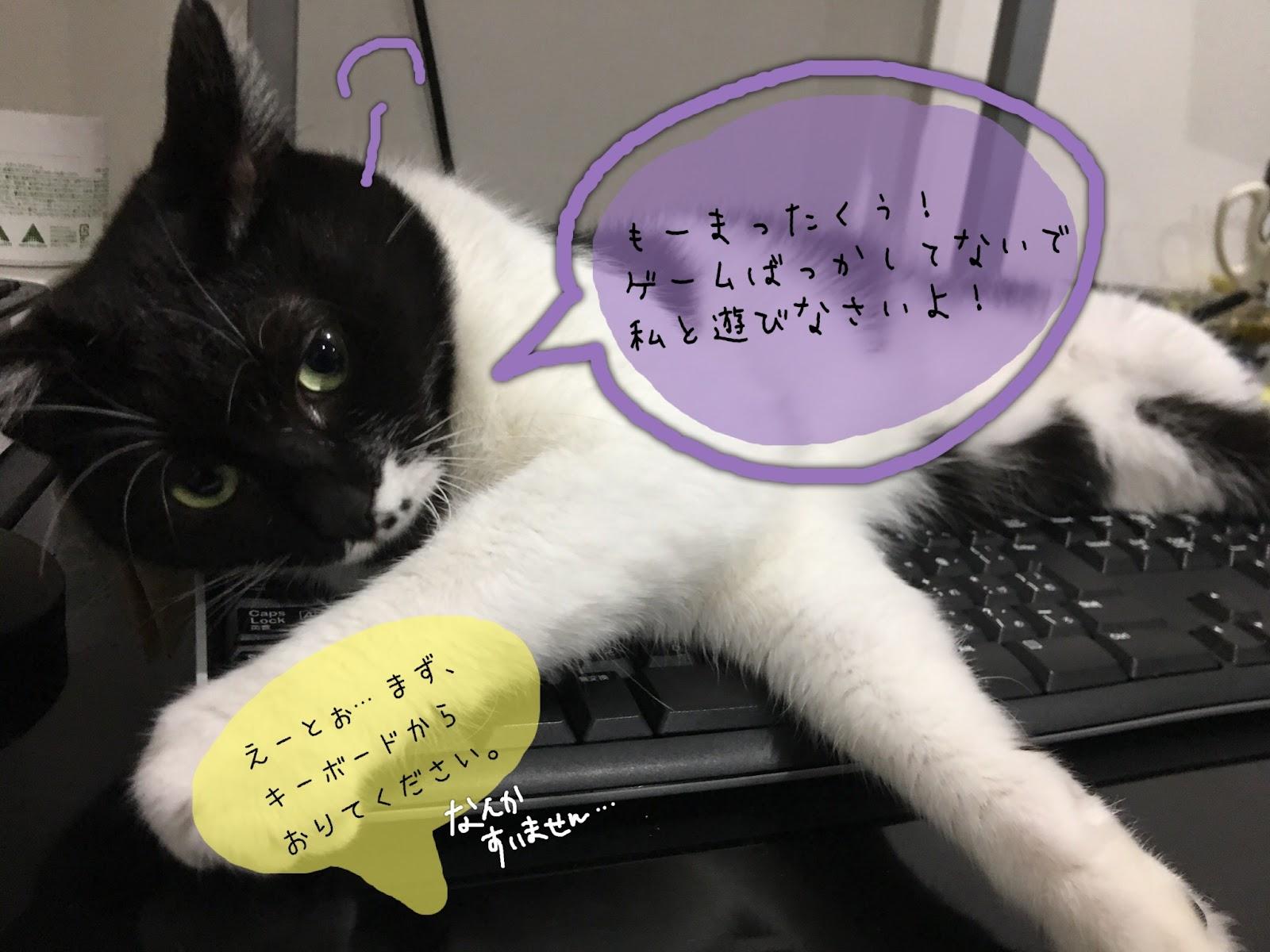 猫のストレス解消!またたびの効果と使い方