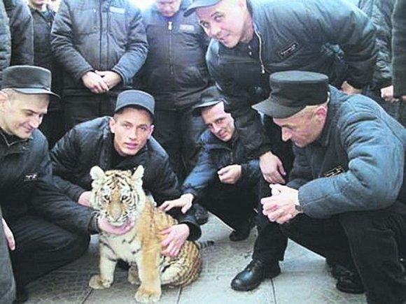 Как сидят в VIP-тюрьмах чиновники и бизнесмены. Фото 9