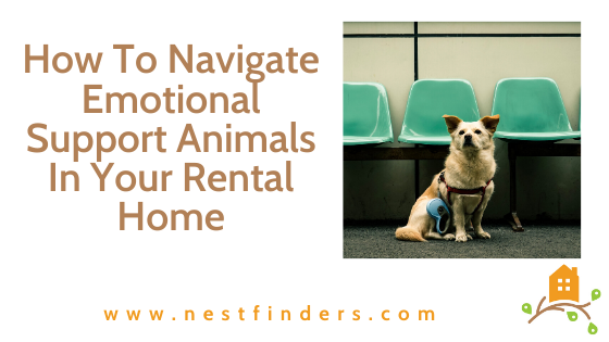 Emotional Support Animals In Your Rental Home