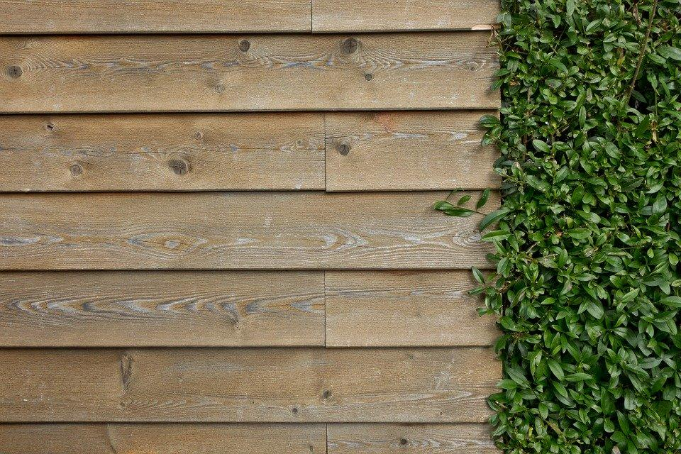 Wall, Wooden Wall, Wall Boards, Boards, Maple, Ivy