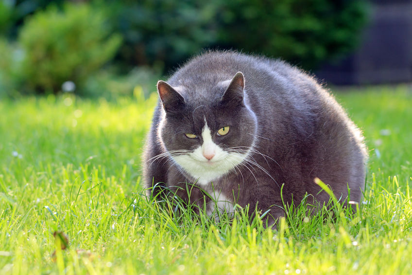 All About Modeling Your Meow-maker - 123RF Blog