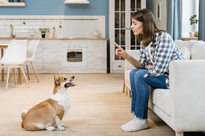ensinar o cachorro a sentar 3