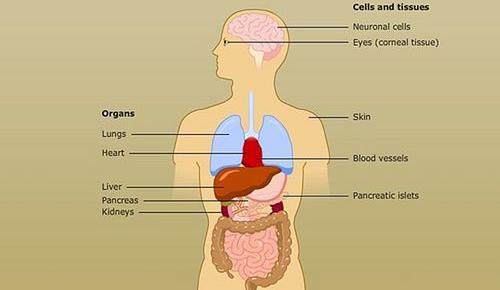 http://www.sagennext.com/wp-content/uploads/2013/02/organ_cell_and_tissue_transplants.jpg
