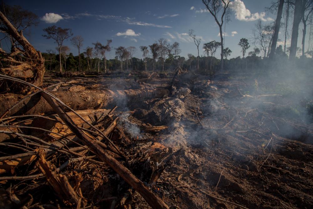 Apoio do poder público pode ser essencial para reduzir taxas de desmatamento e queimadas na Amazônia. (Fonte: Shutterstock)