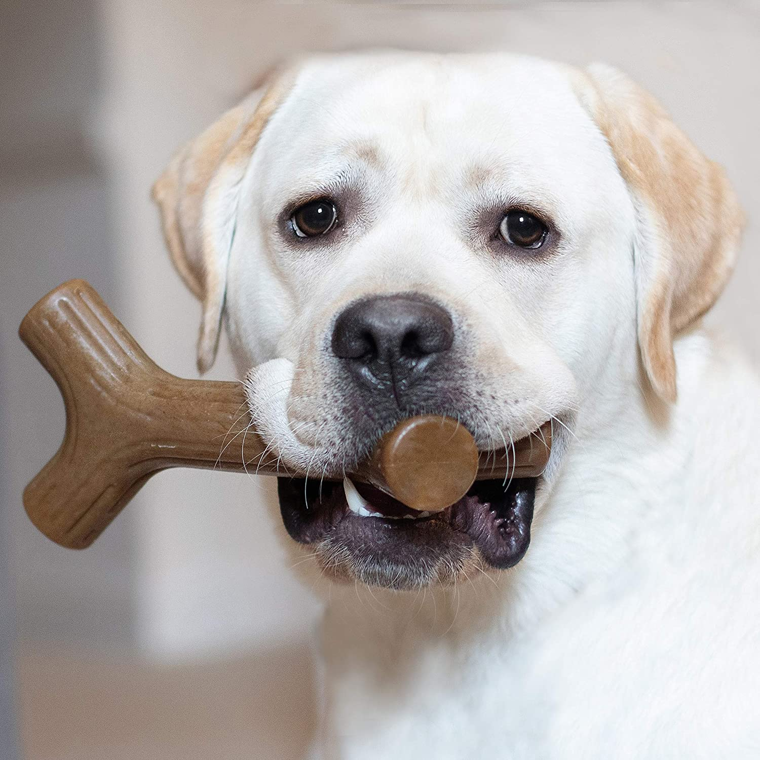 best dog toys for power chewers Benebone Maplestick