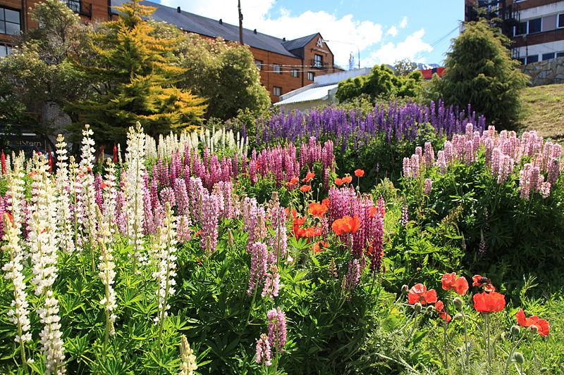 File:Flower garden in Ushuaia (5543010755).jpg