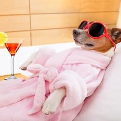 Image result for dog spa