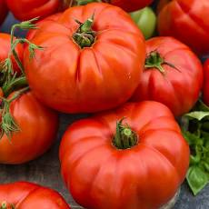 Large, red tomatoes.