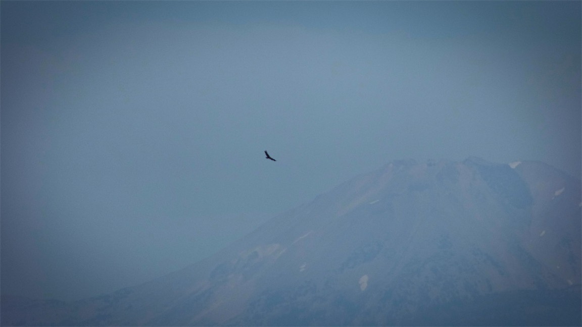 Bird and hazy Lassen.jpg