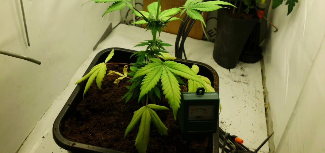 wietplant te veel water