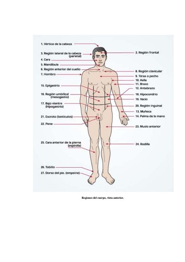 planos y regiones corporales