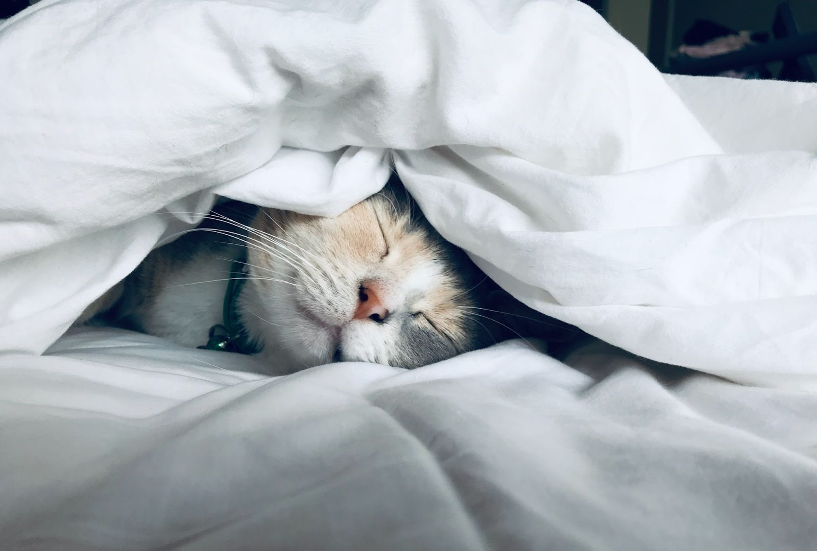 Cat trying to sleep under a blanket