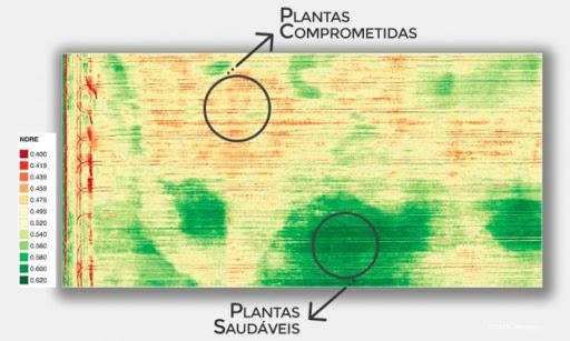 Identificação de reboleiras com o uso de índices de vegetação.                     Fonte: Adaptado de Micasense