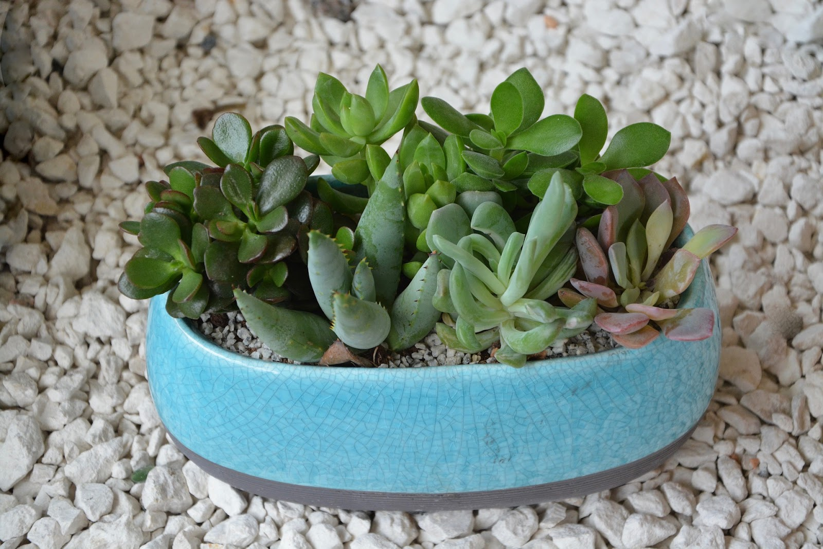 succulent-plant-in-blue-pot.jpg