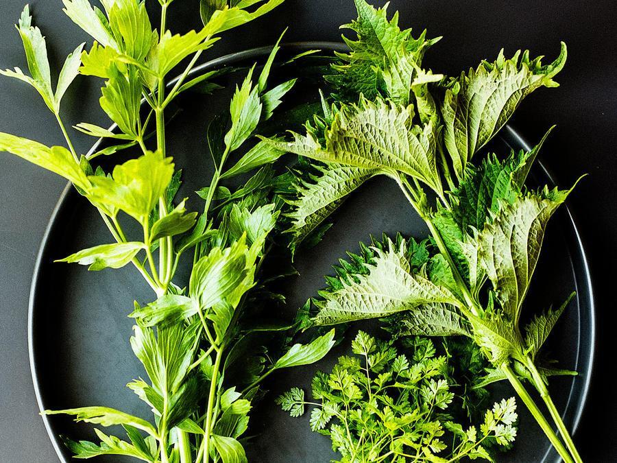 F:\Plantas aromáticas\Sunset magazine.jpg