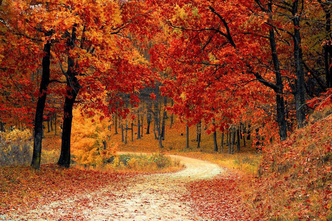 road and fall foliage