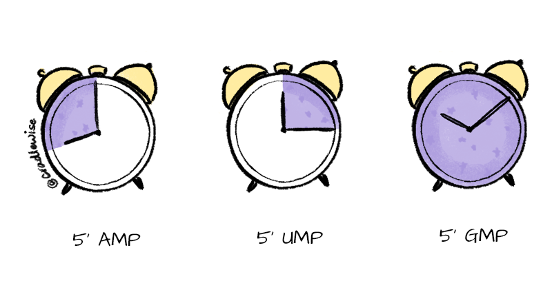 Clocks showing the time at which the 5'AMP, 5'UMP, and 5'GMP neuropeptides rise in the breast milk.