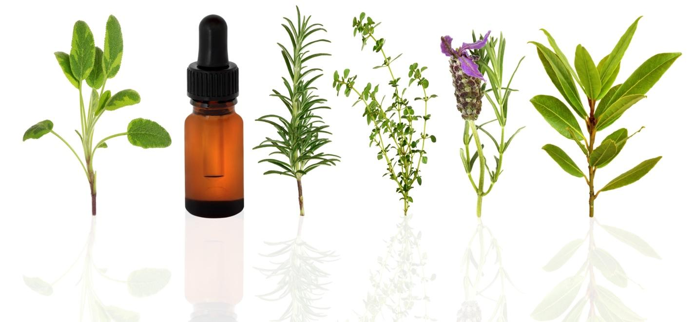 Herb Essential Oil Market | Growth, Trends, Sales Strategy, Revenue  Generation