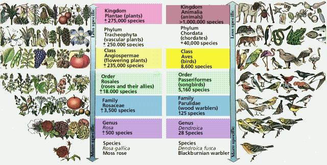 Sistemática biológica: un tema apasionante III