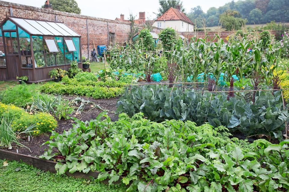 Organic Gardening for Begginers