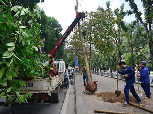 Nhiều người an tâm di dời cây xanh tại Tây Ninh
