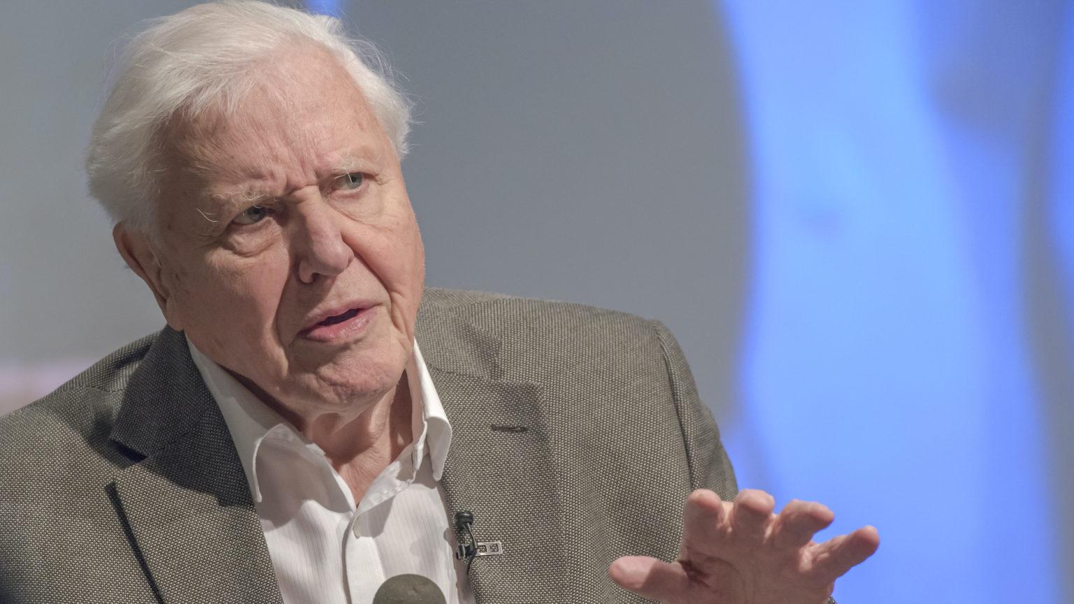 The anti-humanism of David Attenborough