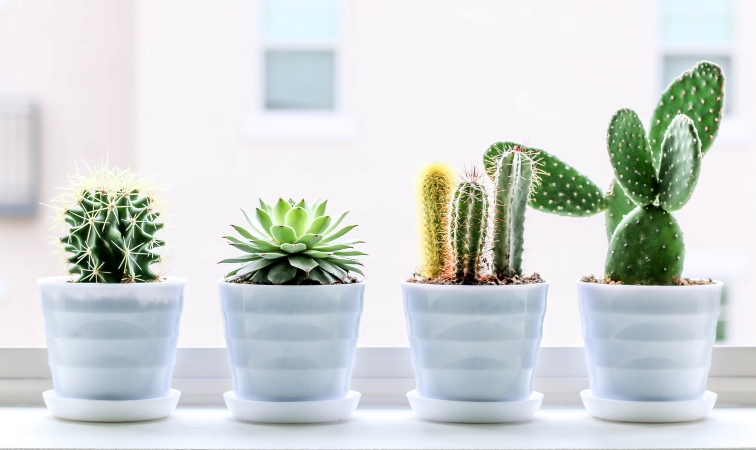succulents as last-minute gifts