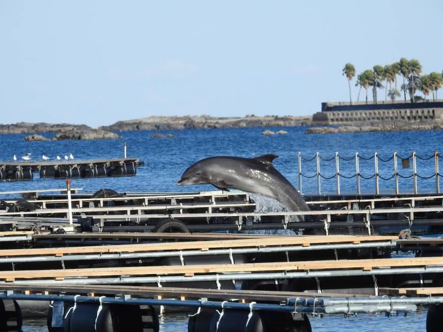 認清日本捕鯨豚文化變質後的龐大圈養利益