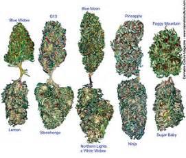 the many lovely marijuana strains