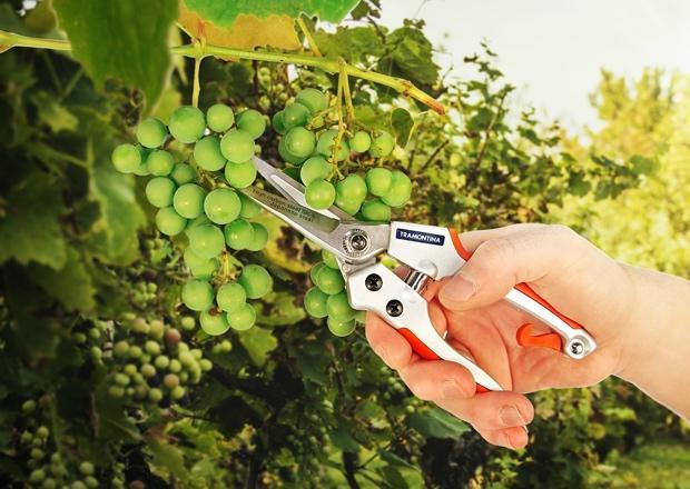 Mão segurando objeto verde  Descrição gerada automaticamente com confiança média
